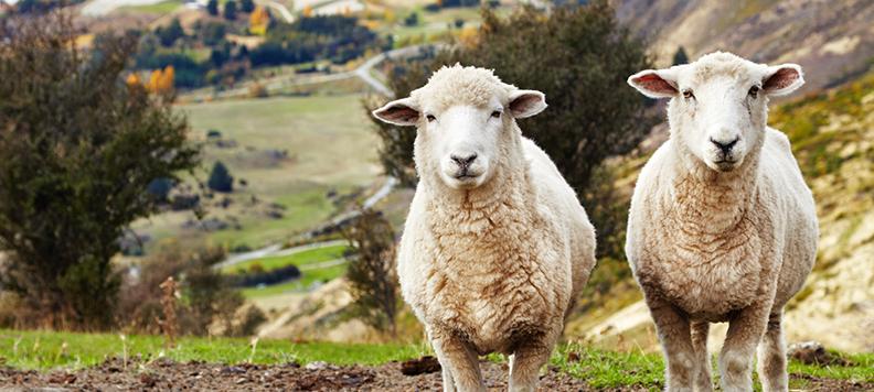 ニュージーランドでJCBカードを利用しよう!キャンペーン